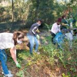 014--Invasive-plant-removal-on-walking-trail
