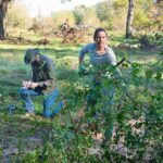 023--Invasive-plant-removal-on-walking-trail