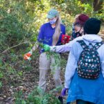 026--Invasive-plant-removal-on-walking-trail